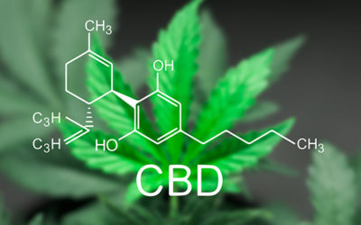What Are The Best Potential CBD Oil Benefits?