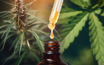 Hemp Seed Oil Vs. CBD Oil : What's The Difference